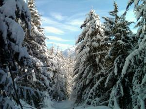 snowshoeing feb 2011